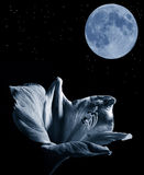 Lilly and the moon. On night sky stock image