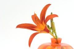 lilly orange Fotografering för Bildbyråer