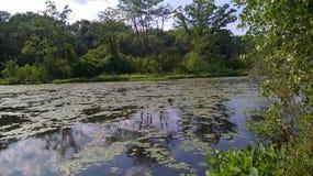 Lilly Pads auf dem Fluss Stockfotos