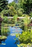 Lilly Pads et Cattails dans le lac bleu Photographie stock libre de droits