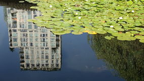Lilly Pads, Pond Koi, Highrise Reflection. Koi swim in the pond in the beautiful Dr. Sun Yat Sen Park in Vancouver's Chinatown. British Columbia, Canada stock footage