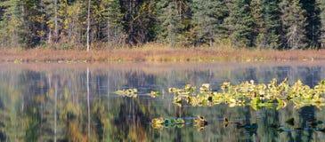 Lilly Pads reflekterade i sjön Arkivbild