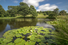 A Lilly Pond Stock Photo