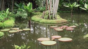 Lilly Pond tranquila almacen de video
