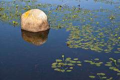 Lilly Rock. Lilly Pond with Boulder on Calm, Sunny Day Royalty Free Stock Images