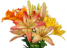 The lilly's bouquet Stock Photos