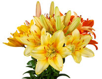 The lilly's bouquet Royalty Free Stock Images