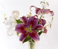 Lilly's in a vase. Close and isolated Stock Photo