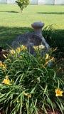 Lilly& x27; s w kwiacie Fotografia Royalty Free