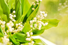 Lilly of the valley Stock Photos