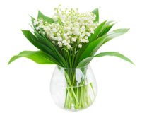Lilly of valley Stock Images