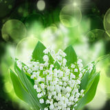 Lilly of the valley flowers close up. On green and black  bokeh  background Stock Images