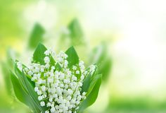 Lilly of the valley flowers close up. On green bokeh background with copy space Royalty Free Stock Photography