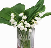 Lilly of the valley flowers and leaves bouquet isolated on white. Background Royalty Free Stock Images