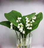 Lilly of the valley flowers and leaves bouquet  on white. Background Royalty Free Stock Photo