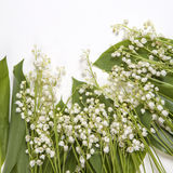 Lilly of the valley flowers and leaves bouquet  on a white background. Selective focus. The Lilly of the valley flowers and leaves bouquet  on a white background Royalty Free Stock Photos