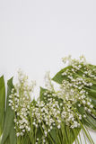 Lilly of the valley flowers and leaves bouquet  on a white background. Selective focus. The Lilly of the valley flowers and leaves bouquet  on a white background Royalty Free Stock Images