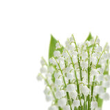 Lilly of the valley flowers Stock Photo