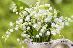 Lilly of the valley flowers in white rustic vase Stock Image