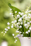 Lilly of the valley flowers in white rustic vase Stock Photos