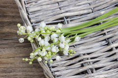 Lilly of the valley flowers Royalty Free Stock Image