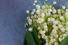Lilly of the valley flowers. Lilly of the valley fresh white flowers and green leaves close up on gray stone background Stock Photos
