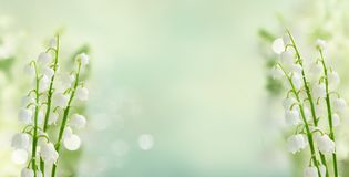 Lilly of the valley. Flowers ob blue bokeh background banner stock photo