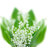 Lilly of the valley posy close up. Isolated on white background Royalty Free Stock Images