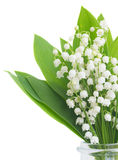Lilly of the valley posy. Close up  isolated on white background Stock Images