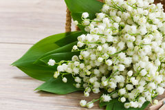 Lilly of the valley posy Stock Image
