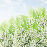 Lilly of the valley posy Royalty Free Stock Photography