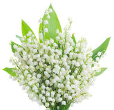 Lilly of the valley posy. With green leaves close up  isolated on white background Stock Photo