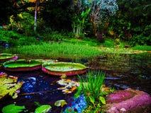 lilly Waimea垫 免版税图库摄影