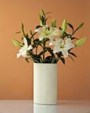 lilly white Royaltyfria Bilder