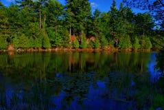 Lillypads y árboles de hoja perenne Foto de archivo libre de regalías
