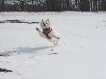 Lilo ama o inverno Foto de Stock