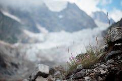 Lilor blommar på en bakgrund av berglandskap Arkivfoton