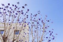 Lilor blommar trädfilialer framme av en byggnad royaltyfri fotografi