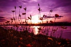 Lilor för solnedgångflodfärg Royaltyfri Bild