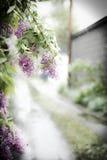Lilor i snön Royaltyfria Foton