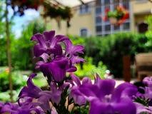 Lilor planterar i tr?dg?rden royaltyfri fotografi