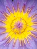 Lilor stänger sig waterlily upp Fotografering för Bildbyråer