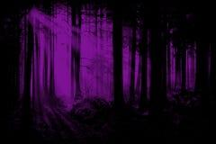 Lilor Violet Woods, Forest Background Arkivfoton
