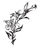 Lily. Painted in black and white Royalty Free Stock Images