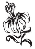 Lily. Painted in black and white Royalty Free Stock Photography