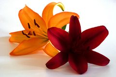 Lily. Orange red bloom flower plant petal petals stamp pollen cup brown green white background two 2 horizontal Royalty Free Stock Photos