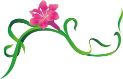 Lily. Flowers, blossom, coloured, draw, original, bright, clear, leaf, beatiful, handsome, fine, pretty, colourful, picturesque, illustration, pattern, picture stock illustration