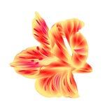 Lily Alstroemeria-de bloemclose-up op witte uitstekende hand wordt geïsoleerd als achtergrond trekt vector die Royalty-vrije Stock Afbeeldingen