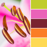 Lily anthers and color swatches Stock Image