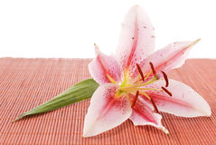 Lily On Bamboo Stock Photo